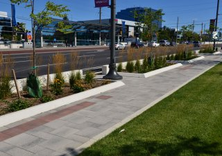 vivaNext BRT - Streetscape Design, ON Product: Umbriano® Color: Winter Marvel, Midnight Sky, Summer Rose